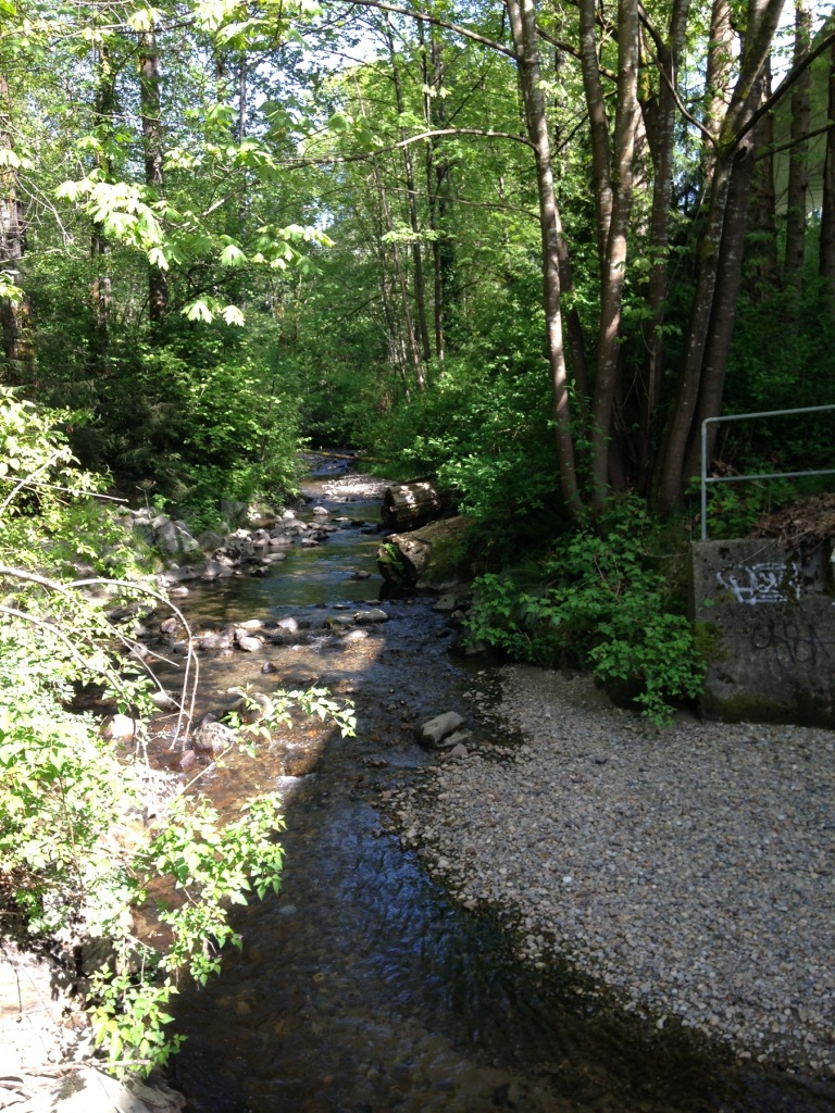 Stream ~ Burnaby ~ May 3, 2015 [taken w iPhone]