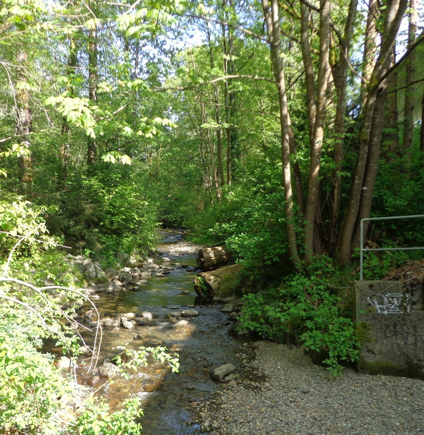 Stream ~ Burnaby ~ May 3, 2015 [taken w Sony DSC-W650]