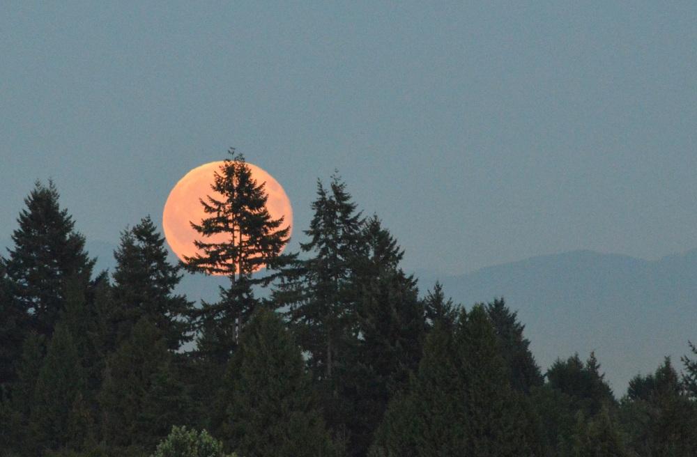 Blue Moon rising (1/4)