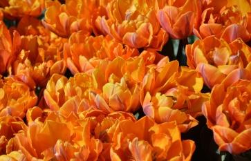 Very orange.